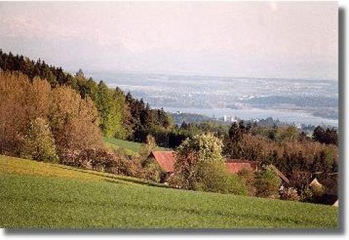 Ferienwohnung Hügelhof#12