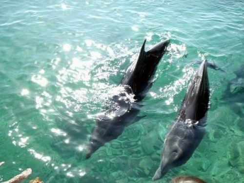 Delphin Appartement für 4 Personen#6