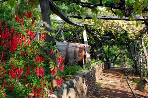 The Wine Lodge#15