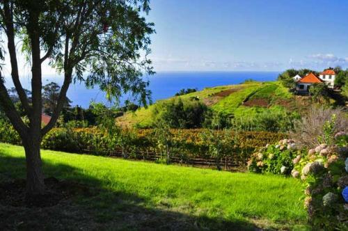 Holiday House of Madeira #1
