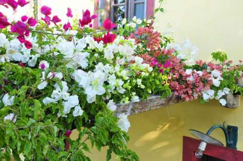 Ferienhaus Madeira #5